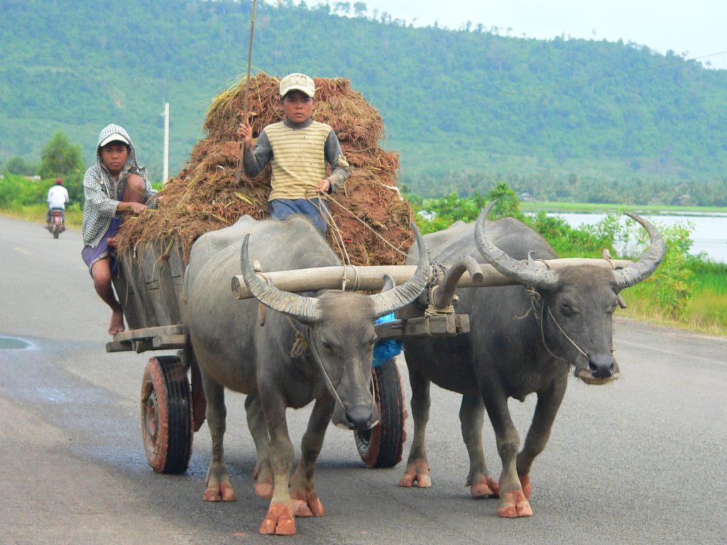 Камбоджа