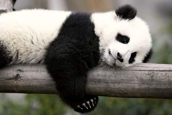 8 шагов, чтобы провести ICO и не облажаться: объясняем на пандах