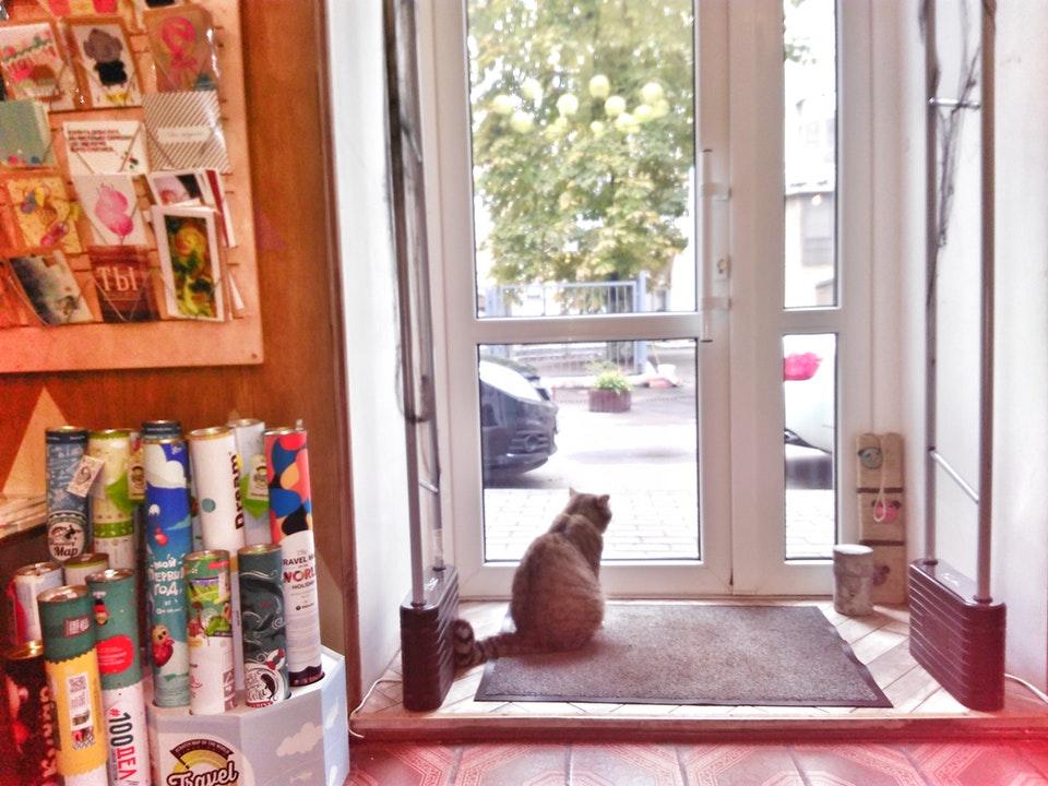 Кот Элиотт, живёт в «Хармсе»