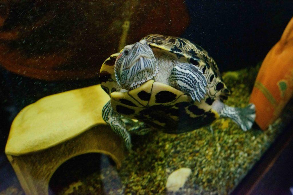 Не заскучать на работе Жене Шевченко помогают аквариумные рыбки
