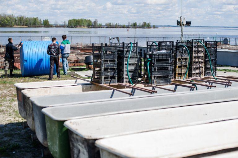 Bester продает по Украине около 400 кг икры в год, а наращивать объемы планирует за счет экспорта