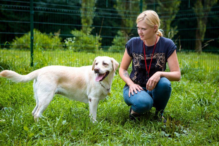 Идея создать свой бизнес появилась в 2015 году, когда Сандра прочитала статью об американских садиках для собак