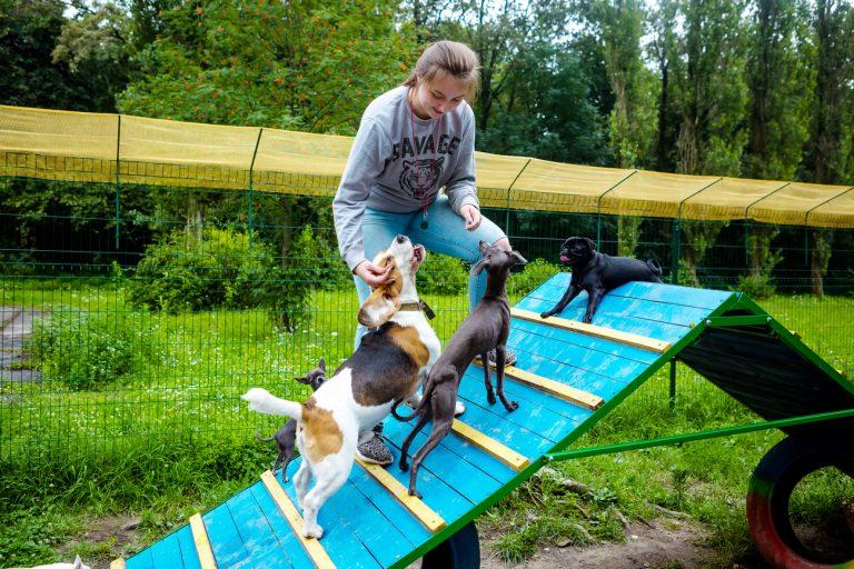 Садик для собак девушка хотела построить исключительно в пределах города, недалеко от метро и в лесопарковой зоне