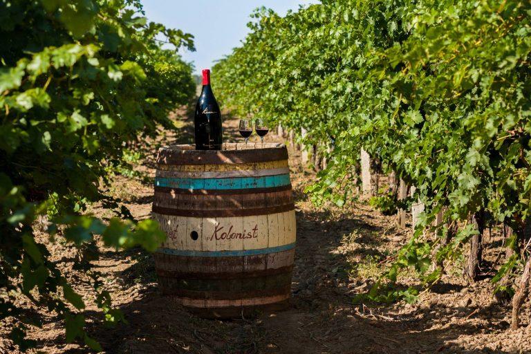 Виноградники «Колониста»