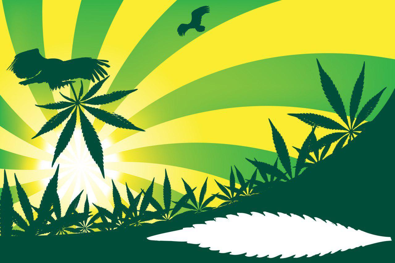 Вдруг легализуют «травку». Семь стартапов, которые зарабатывают на марихуане