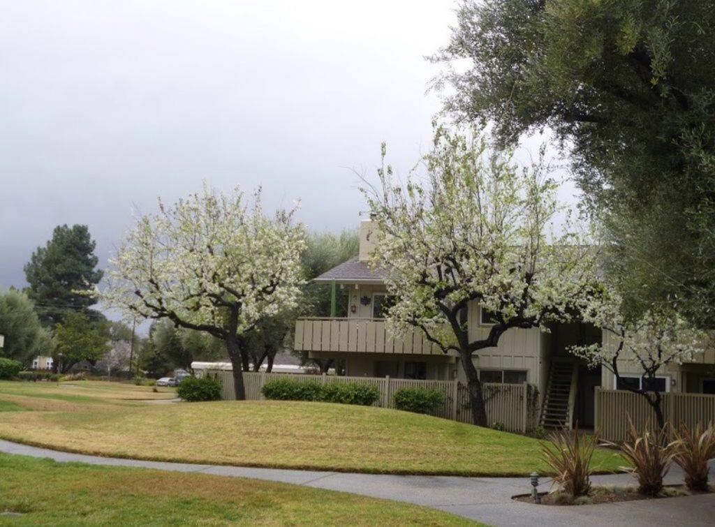 Подвір'я житла у китайської сім'ї в Mounteen View, де жив Ігор