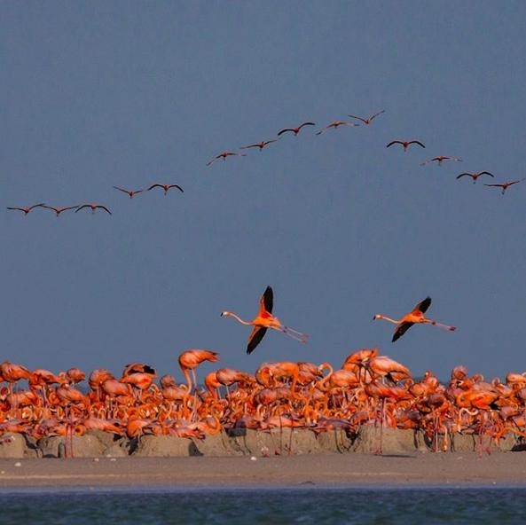 Фото с инстаграма National Geographic