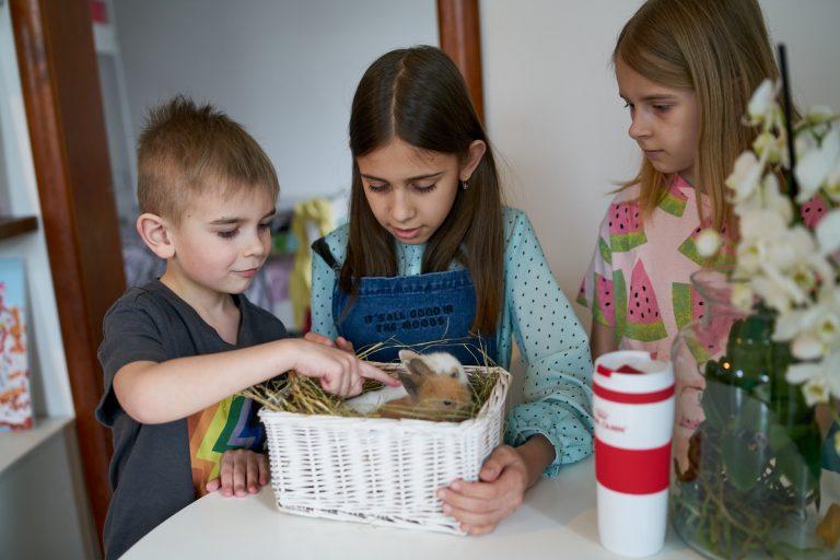 Дети Александры с крольчатами