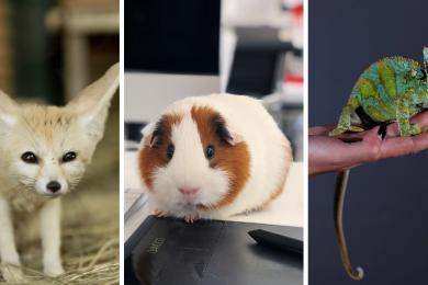 Офисы с домашними животными