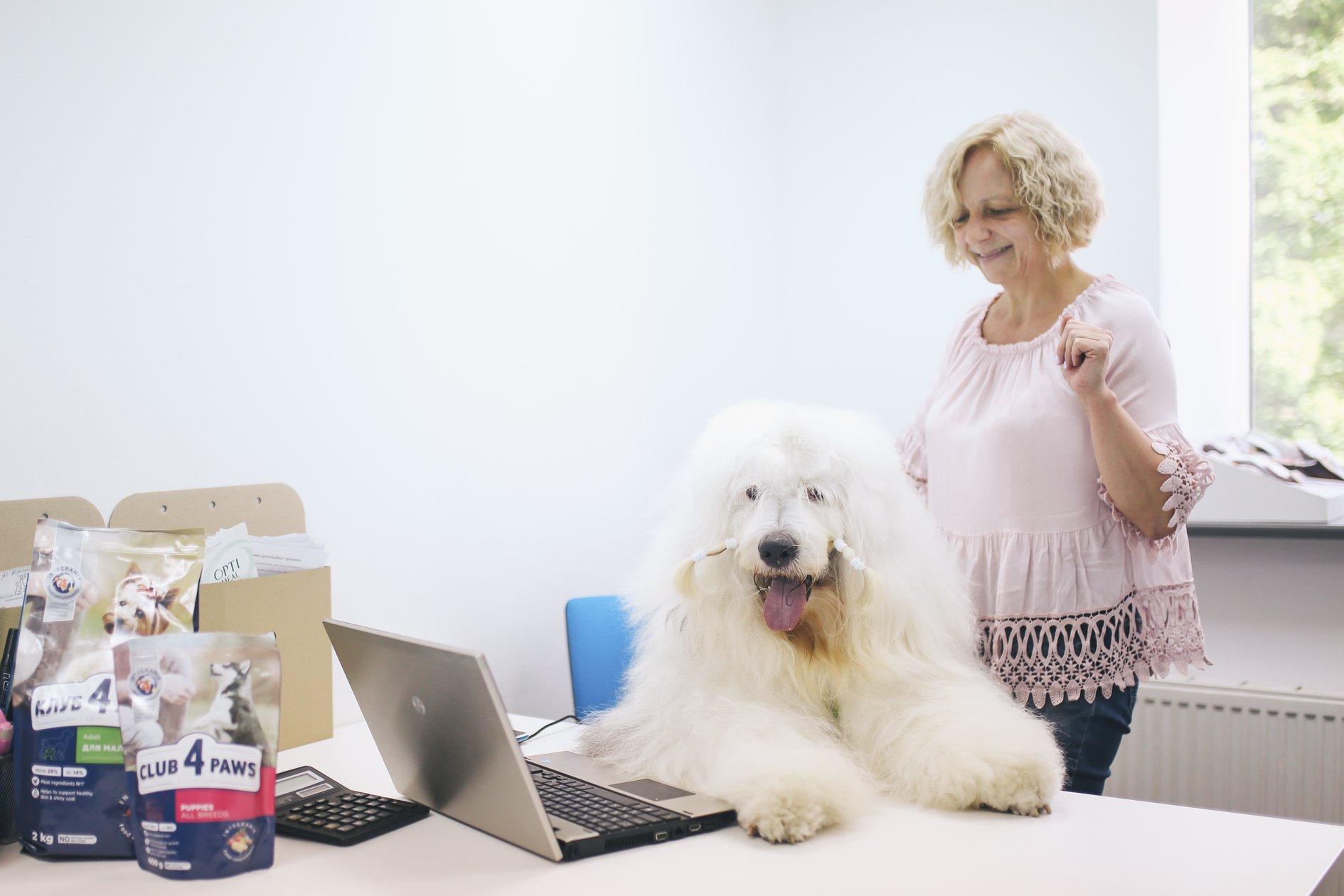 Питомец в офисе Kormotech