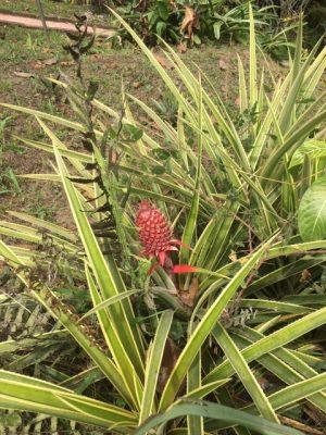 Відкрив бізнес в США, купив ферму в Еквадорі та вирощує каву: історія Ігоря Овертченко
