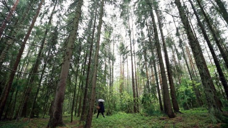 Саара Алхопуро ходит в походы и собирает грибы в финском прибережном городке Турку. Фото: CNBC Make It