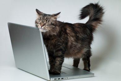 «Зоопарк» в Google Docs: как придумали зверюшек, которые обозначают вас в документах