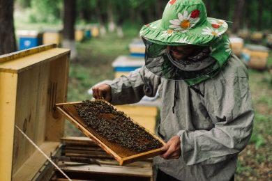Как организовать рабочий день 250 млн пчел: история бренда «Медовий Шлях»