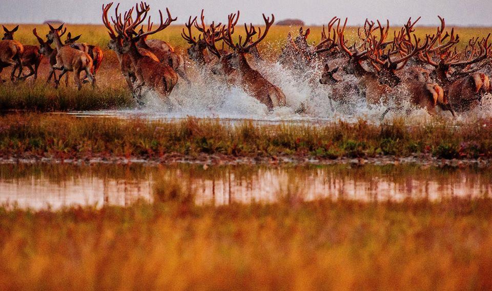 Фото: Андрей Горб