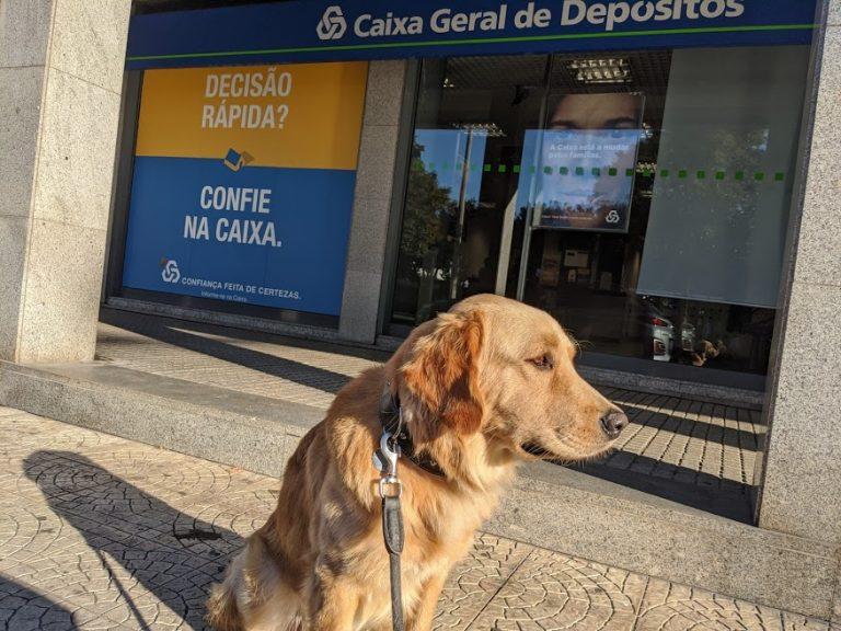 Филя, пес Веры на фоне банка Португалии